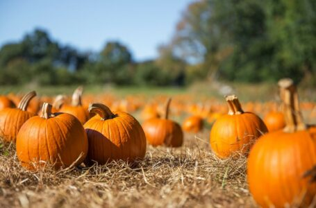 Why you should eat more pumpkin